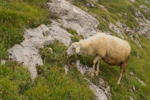 Hodná ovečka